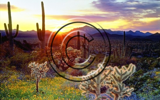 USA cactus landscapes